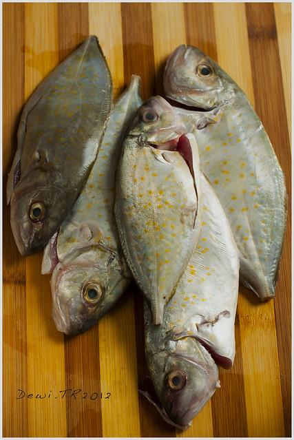 jezt fish