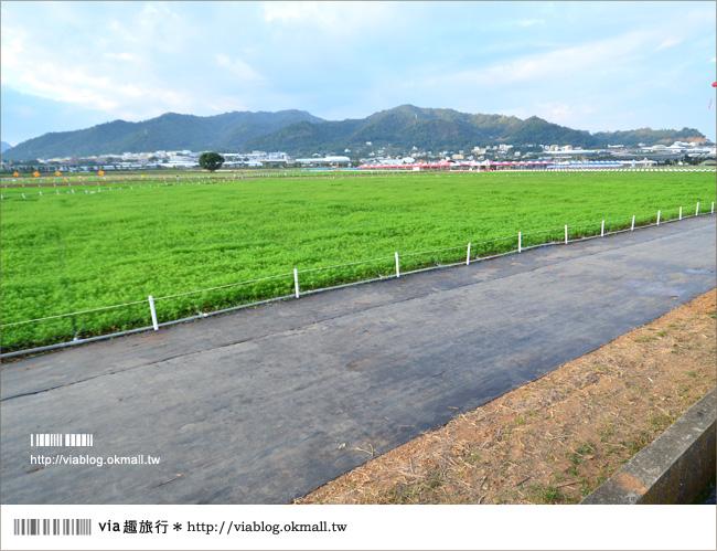 【新社花海2012】2012新社花海節活動介紹及交通資訊8-5