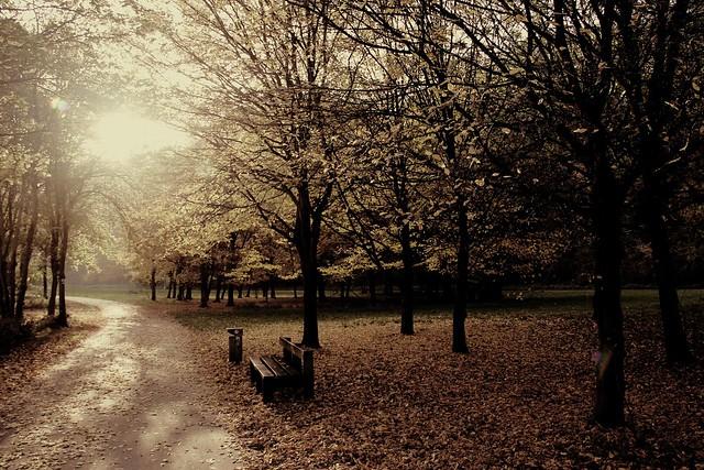 Autumn Leaves 002
