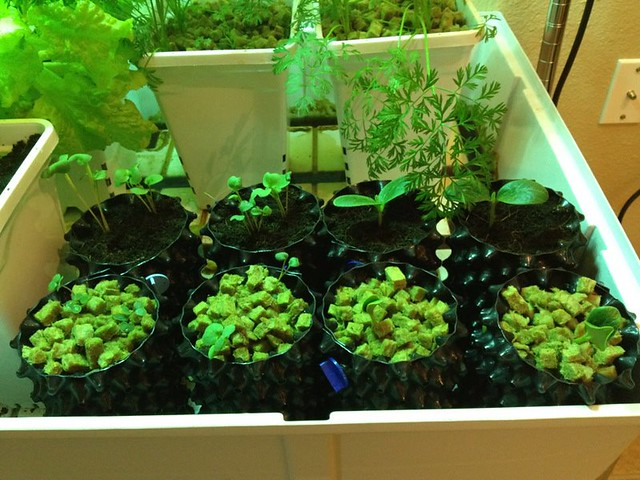 8191434175 ac430d9b11 z - What You didn't Know about the Benefits of Growing Plants and Vegetables with Hydroponics