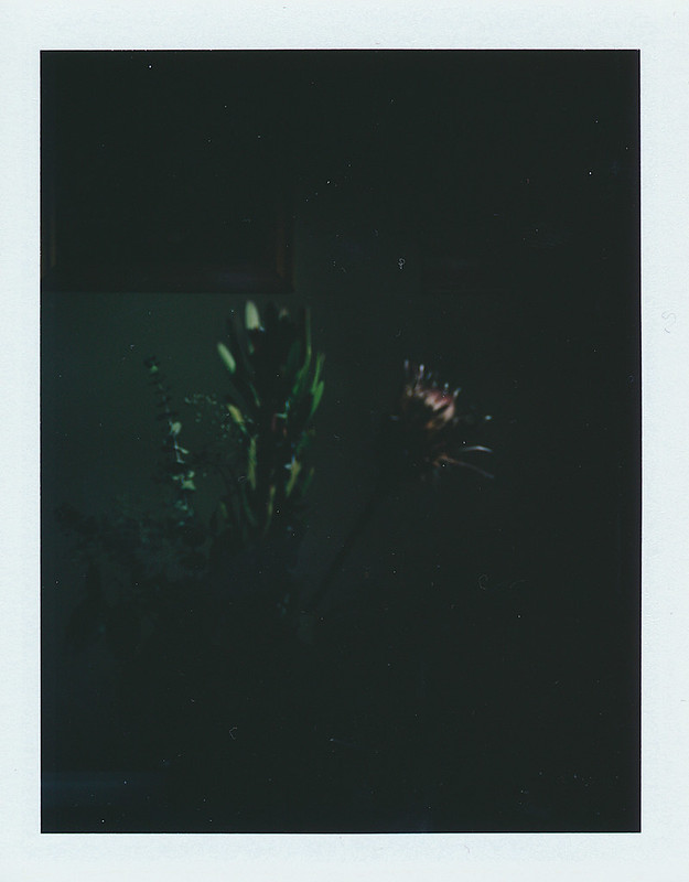 Polaroid Tests