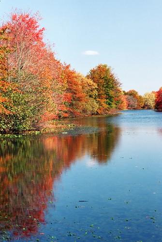 3 color fall film canon eos autum kodak foliage negative c41 85mmf18 ektar100 plustek7600i silverfast8