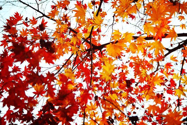 내 아름다운 가을
