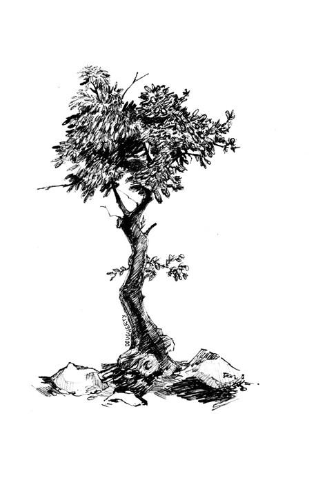 leafyweb