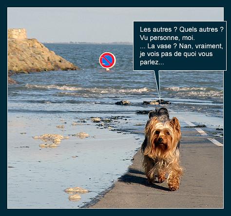 La pêche aux palourdes (bédé photo-roman) 8209438850_1ab08af788