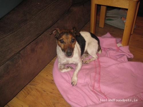 Tue, Nov 20th, 2012 Found Female Dog - Killenaule, Thurles, Tipperary