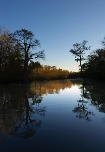 mississippi bayou swamp cypresstree jonican poticaw