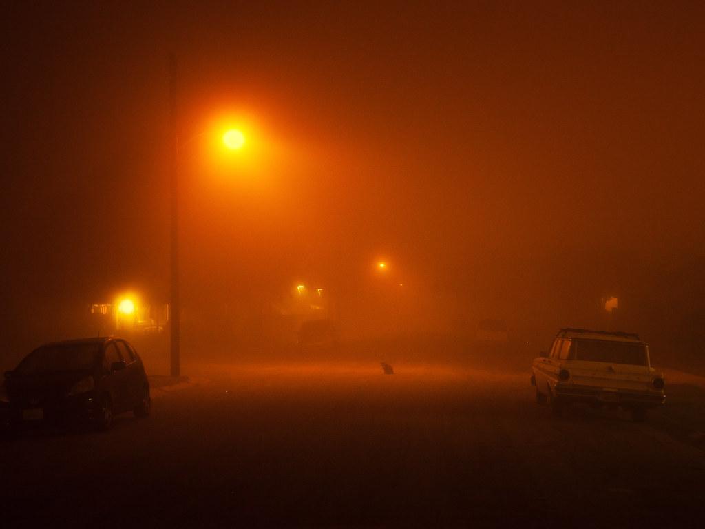 cat-in-fog