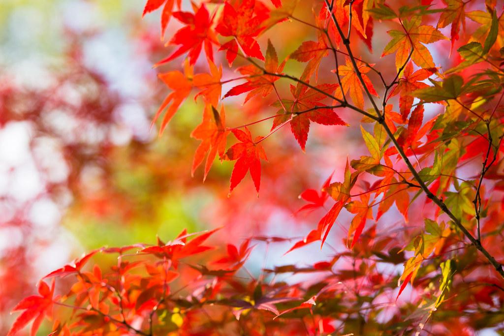 Kyoto-shi, Kyoto Prefecture, Japan, 0.006 sec (1/160), f/3.5, 85 mm, EF85mm f/1.8 USM