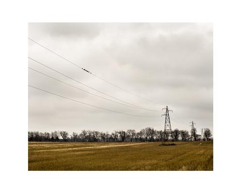 london landscape 50mm nikon power fullframe d800 leonardcohen birdonawire nikond800