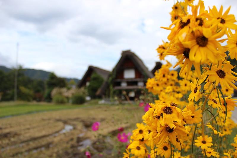 白川郷を散策 花