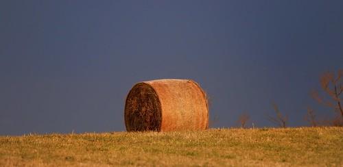 roll hay