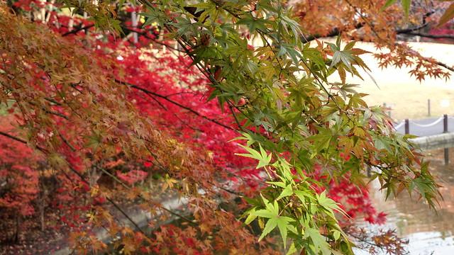 Autumn coloured trees