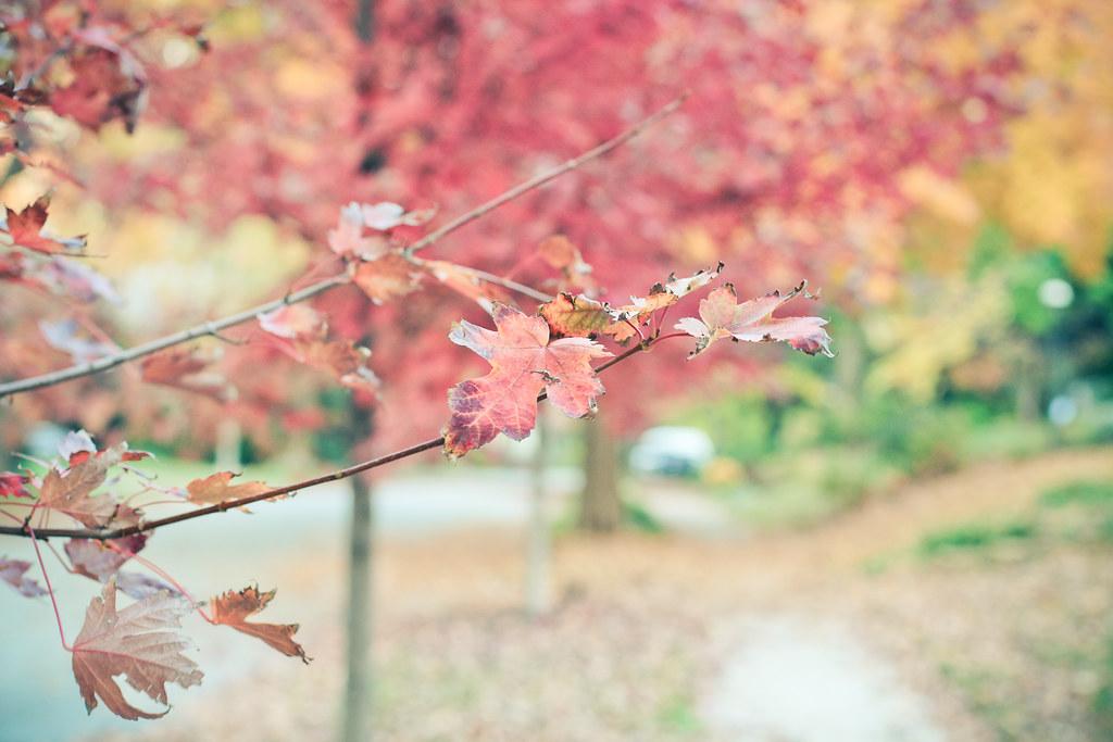 otoño {1}