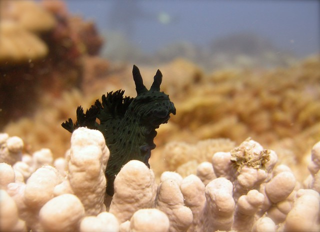 Even nudibranches say goodbye to Werner on his going-away dive