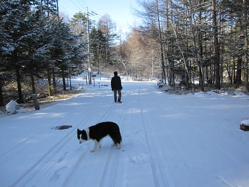 雪の中の散歩・・・2012.12.3 by Poran111