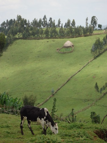 Green Southern Nations, Nationalities, and People's Region, Sidamma, Ethiopia