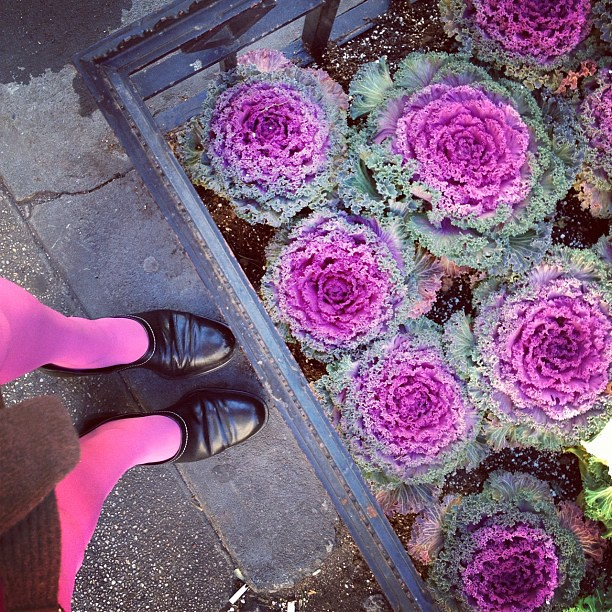 I love when I match the ornamental kale.