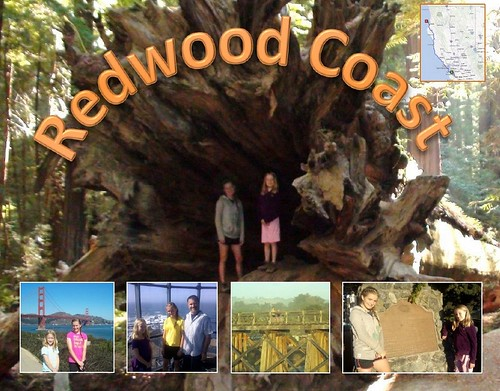 Redwood Coast Postcard
