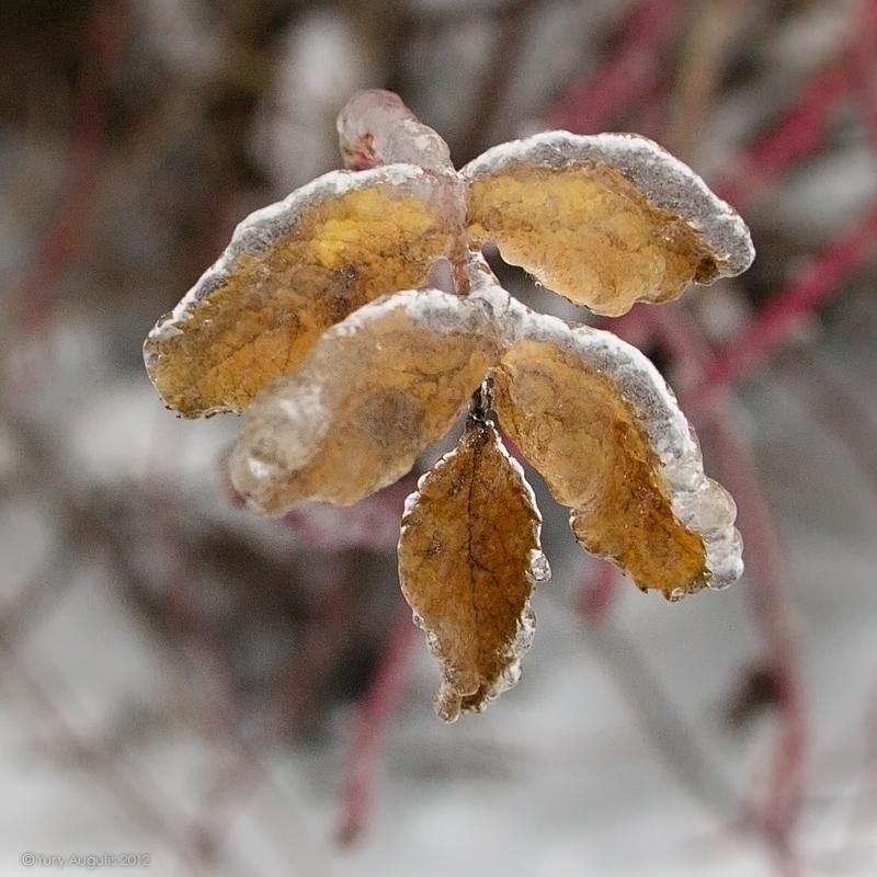 Ice rain 2012 11 30. 01