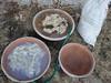 Le tre vasche di lavaggio