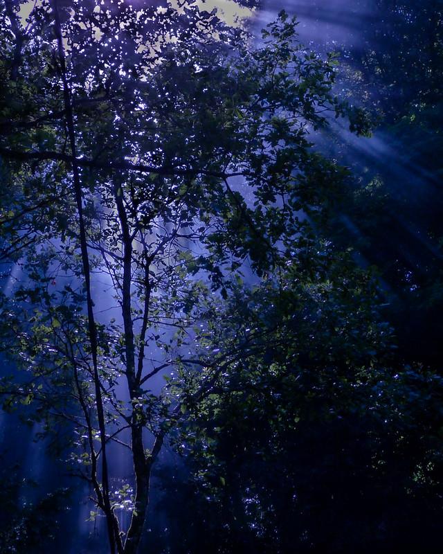 Lumière d'ambiance en forêt... 8273645884_81f5297ba0_c