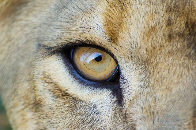 how to fix white eye in photos