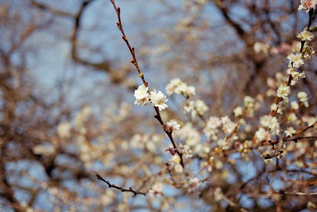 Des fleurs en décembre