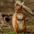 the ☼ The Best of Wildlife & Nature ☼ group icon