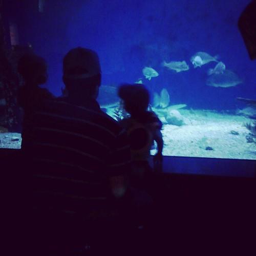 Somebody loves the aquarium!