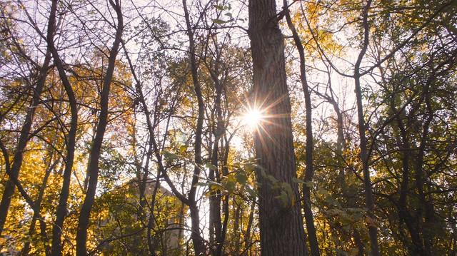 anteketborka.blogspot.com, étoile335