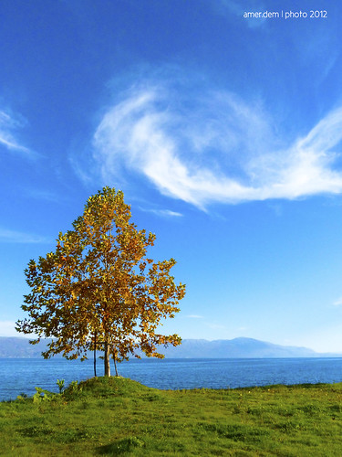 blue autumn tree green nature water grass clouds landscape fresh abigfave