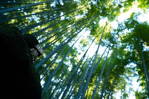 Kamakura photowalk 2012 - Bamboo monster - 無料写真検索fotoq