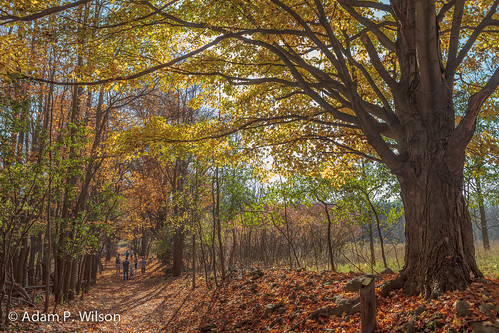 usa newyork fall america day seasons unitedstates time outdoor earth unitedstatesofamerica location rochester equipment ef2470mmf28lusm eos5d