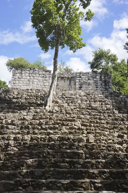 Calakmul 55