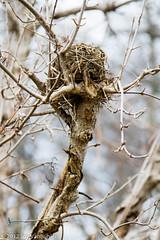 318/365 - Empty Nest
