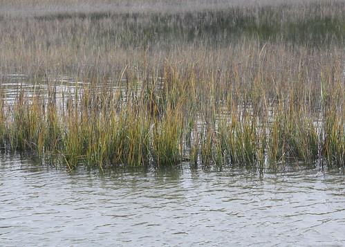 Tivoli River Marsh