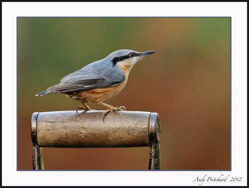 Nutty on spade by Andy Pritchard - Barrowford