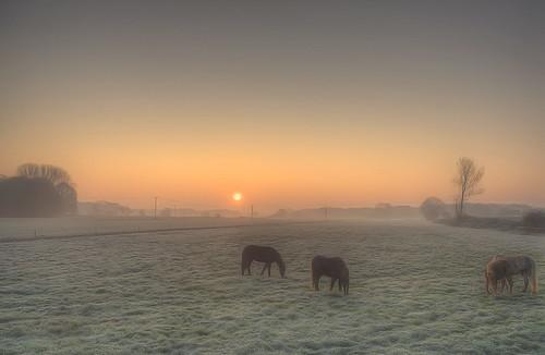 sunrise sonnenaufgang hdr grafschaftbentheim