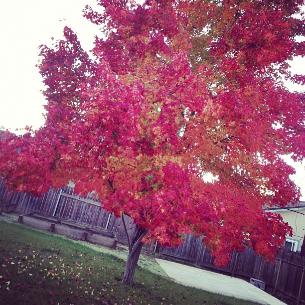 And just like that, it has turned into fall in our backyard.