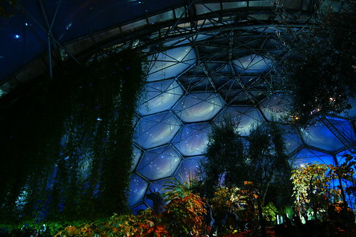 Inside the Biome. The bubbles are dark blue with the reflections of lights looking like constellations. Some plants are uplit, others are in shadow