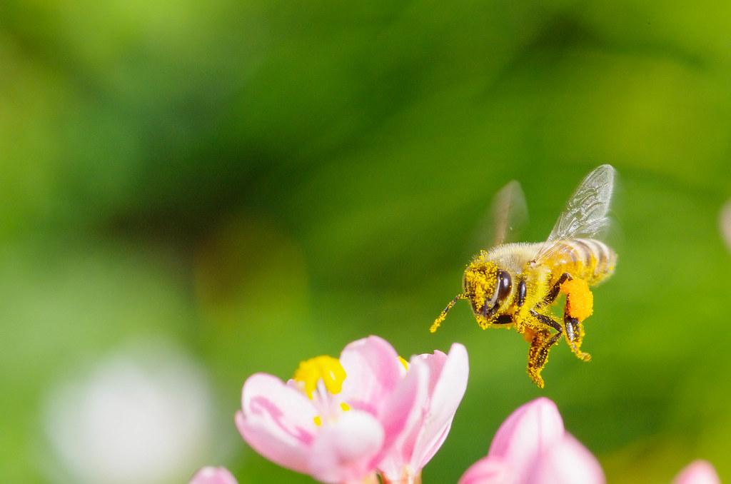蜜蜂飛啊飛!!!
