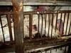 כלובים חלודים ופוצעים
