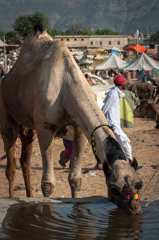 Camel Fair in Pushkar