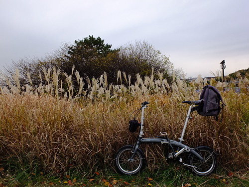 Dahon Curve SL and すすき by owenfinn16
