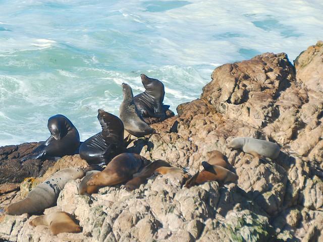 sea lions_0262