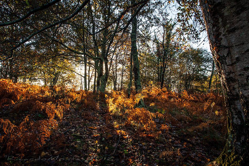 luces de otoño2