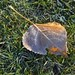 First Frost on automn leave