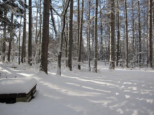 雪の午後~庭 2012.12.8 by Poran111