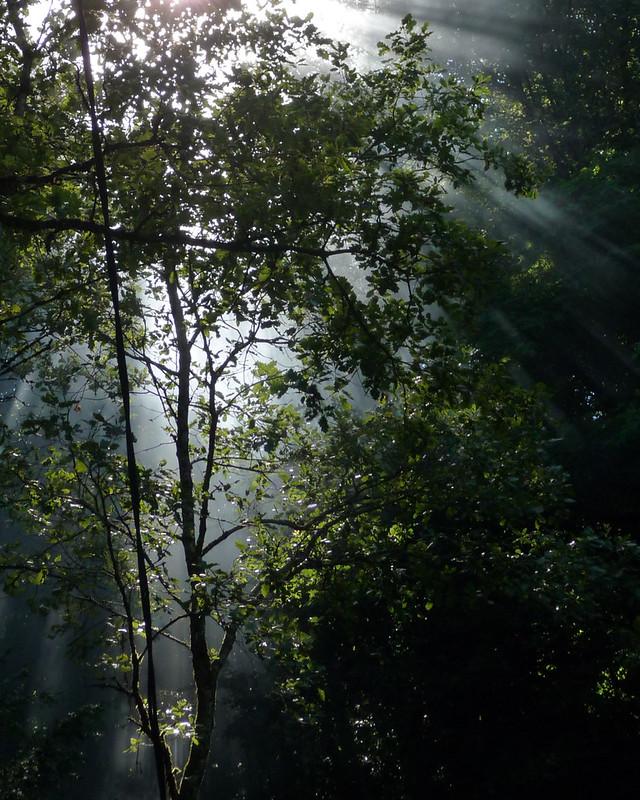Lumière d'ambiance en forêt... 8272575779_4df2147eef_c